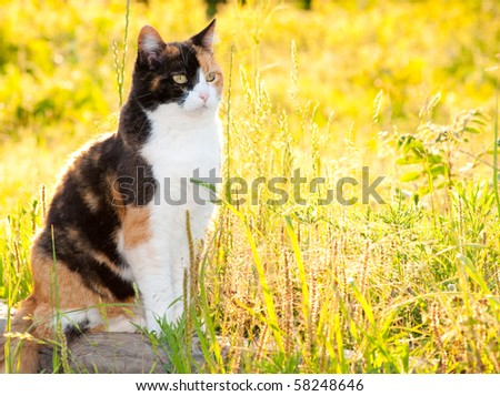 Beautiful calico cat in high grass with bright sunshine - stock photo