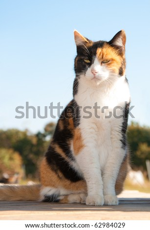 Beautiful calico cat sitting on porch with a background of trees and blue sky - stock photo