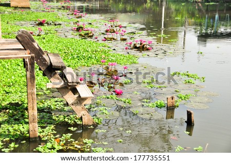 Beautiful Canal in Thailand with lotus on the clear water (feel peaceful)