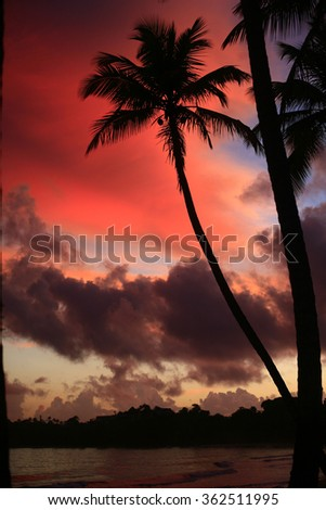 Beautiful Caribbean beach, palm trees on the beautiful romantic beach , Sandy beach with palm trees, heaven on earth, most beautiful beach on the world , small young palm tree on the sandy beach - stock photo