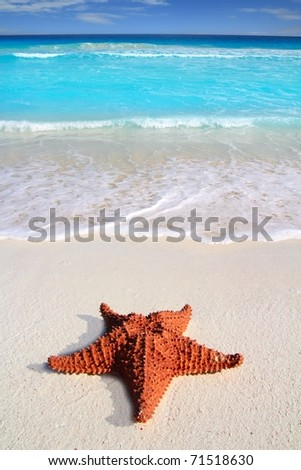 beautiful caribbean starfish tropical sand turquoise beach [Photo Illustration] - stock photo