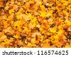 Beautiful carpet of fallen golden maple leaves - stock photo