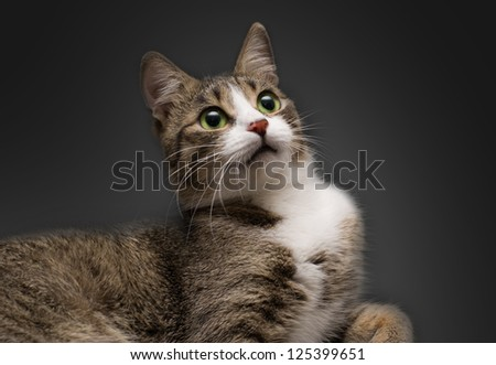 Beautiful Cat - stock photo