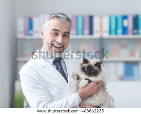 Beautiful cat at the veterinary clinic, a doctor is holding and cuddling it, pet care concept