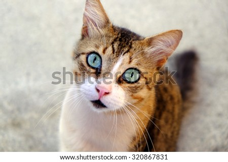 Beautiful cat close up