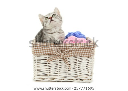 Beautiful cat in basket isolated on white - stock photo