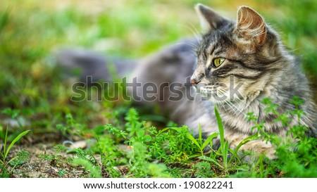 Beautiful cat in city's green summer garden. - stock photo