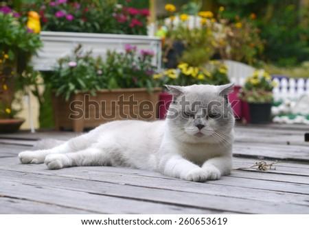Beautiful Cat in garden - stock photo
