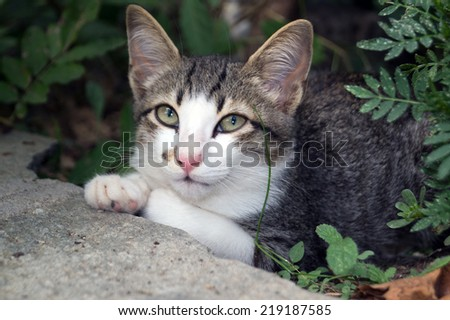 Beautiful cat in green garden