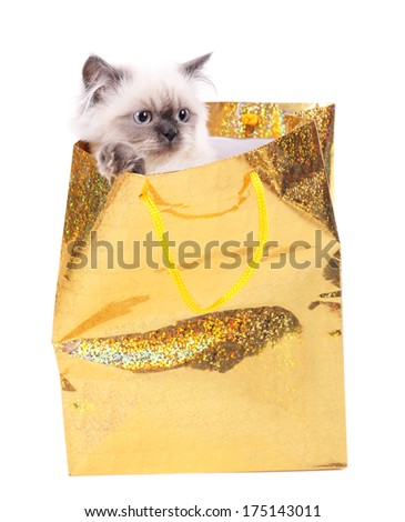 Beautiful cat in package isolated on white - stock photo