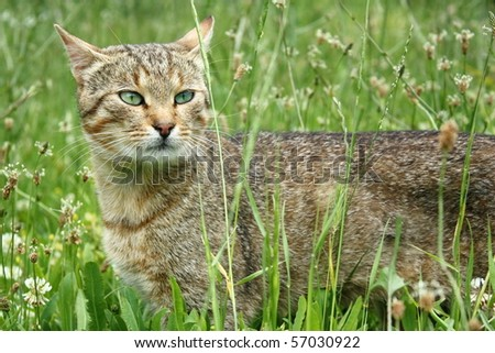 Beautiful cat in the grass - stock photo