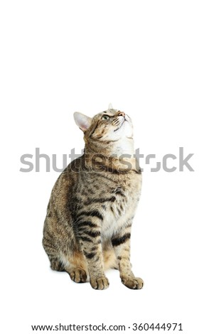 Beautiful cat isolated on a white - stock photo