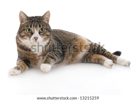 Beautiful cat isolated on a white background - stock photo