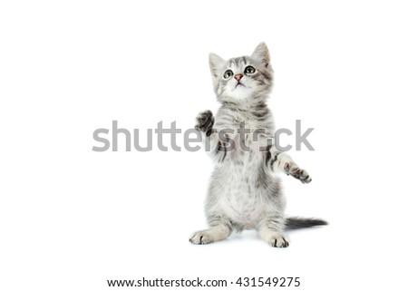Beautiful cat isolated on white background - stock photo