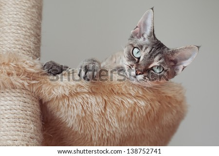 Beautiful cat laying on the scratching post in hammock - stock photo