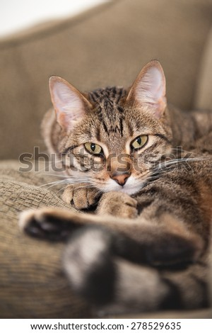 Beautiful cat lies on the couch, nestled between the back cushion and a matching pillow