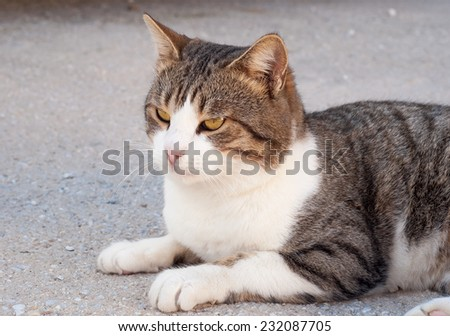 beautiful cat lying in the sun in the courtyard - stock photo