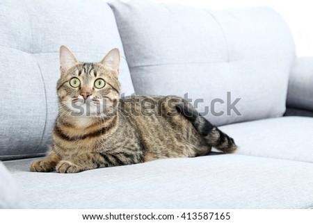 Beautiful cat lying on the grey sofa - stock photo