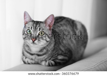 Beautiful cat near window close-up - stock photo