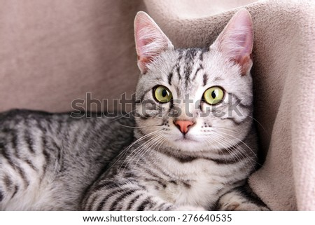 Beautiful cat on chair close-up - stock photo