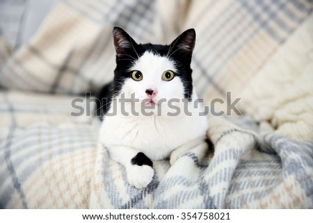 Beautiful cat on plaid - stock photo