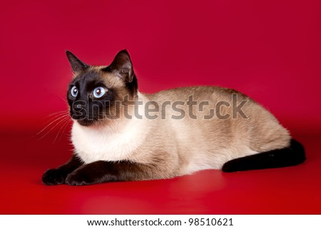 Beautiful cat  on red background