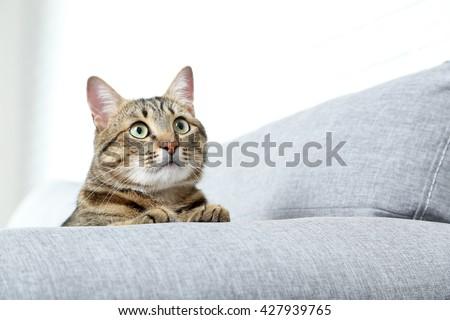 Beautiful cat on the grey sofa, close up - stock photo