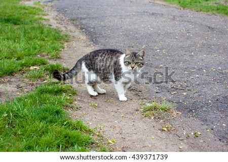beautiful cat on the road - stock photo