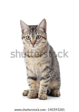 Beautiful cat on white background. - stock photo