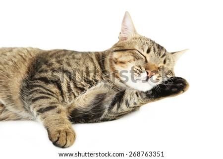 Beautiful cat on white background - stock photo