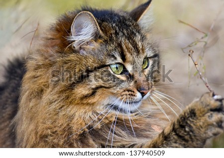 Beautiful cat playing in the garden - stock photo