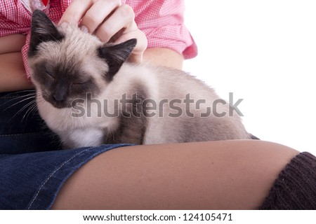 Beautiful Cat Relaxing on Owners Lap and Hands - stock photo