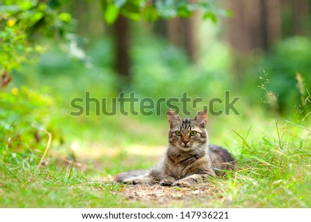 Beautiful cat relaxing outdoors in the pine forest