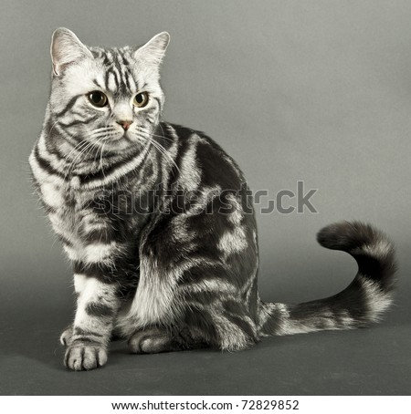Beautiful cat sitting - stock photo