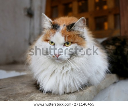 Beautiful cat sitting on a wall photographed close up - stock photo