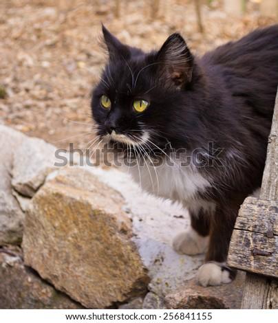 beautiful cat walks on nature - stock photo