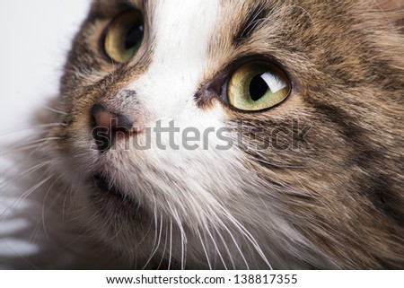 beautiful cat with green eyes close looking up - stock photo