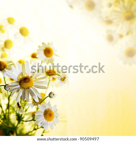 Beautiful chamomile flowers picked up in a field against a bright, slightly textured background. Selective focus and plenty of copy space. - stock photo