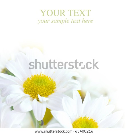 Beautiful Chamomiles Design - stock photo