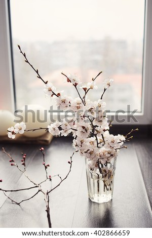 Beautiful Cherry or apricot  blossom branches in a glass vase on wooden floor near window. Place for text.