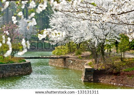 "Beautiful ""cherry tree"" in the clear water surface"