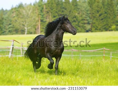 beautiful chestnut horse stallion running in nature - stock photo