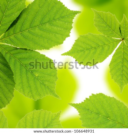 Beautiful chestnut leaves. Leaves pattern - stock photo
