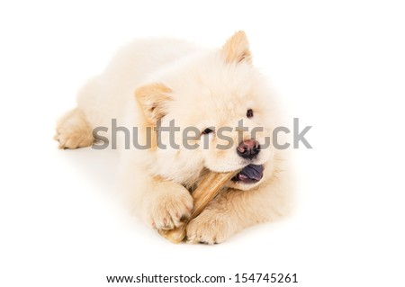 Beautiful chow chow puppy with bone isolated - stock photo