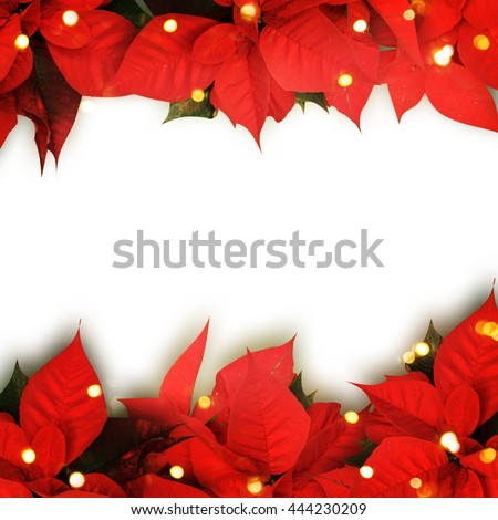 beautiful christmas background with red poinsettia