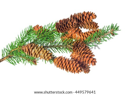 beautiful Christmas decoration of fir tree branch with cone is isolated on white background, close up   - stock photo