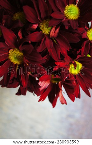 Beautiful chrysanthemum flowerrs in a vase on wooden background