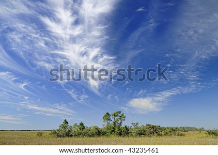 Beautiful cirrus cloud formation over the Florida Everglades with a bayhead hammock or tree island in the foreground. - stock photo