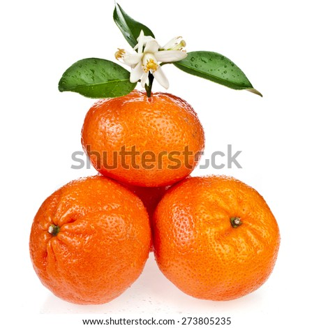 Beautiful citrus  tangerine  with twig  close up isolated on white background - stock photo