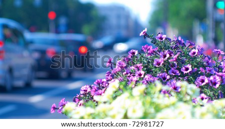 Beautiful city background with flower beds and cars in the background. Shallow DOF.